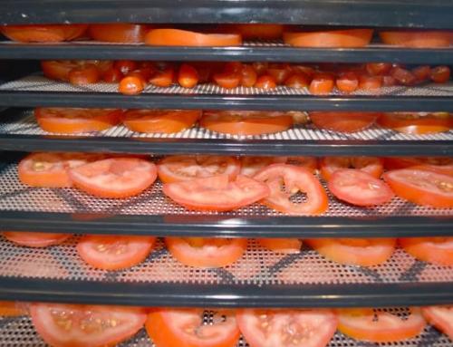 دستگاه خشک کن گوجه فرنگی
